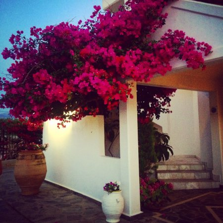 Chryssana Beach Hotel: This hotel is beautiful!