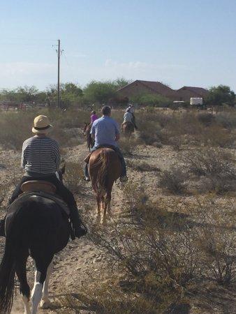 Yucca照片