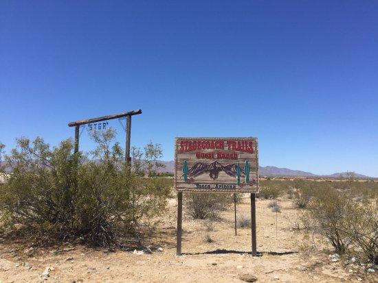 Yucca, AZ: photo9.jpg
