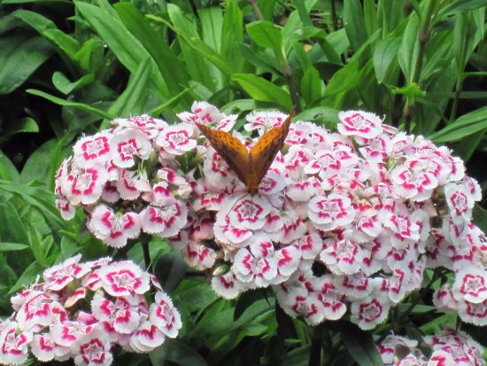 Thomas Jefferson's Monticello: beautiful flowers and butterflies