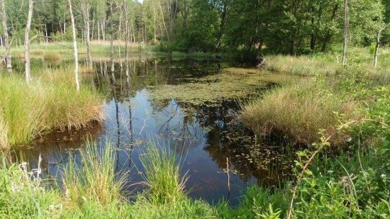 Naturschutzgebiet Konigsbrucker Heide