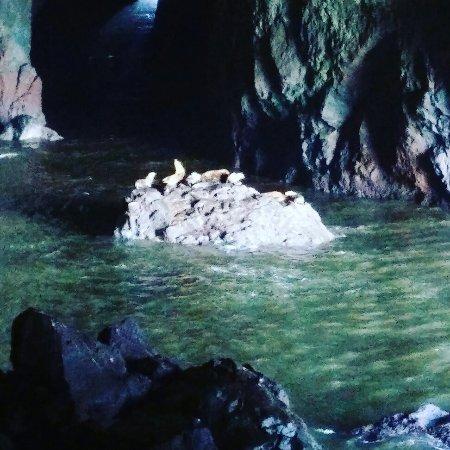 Sea Lion Caves: IMG_20160622_142715_large.jpg