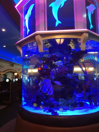 Gigantic fish tank at front of restaurant. Very lovely. - Picture of ...
