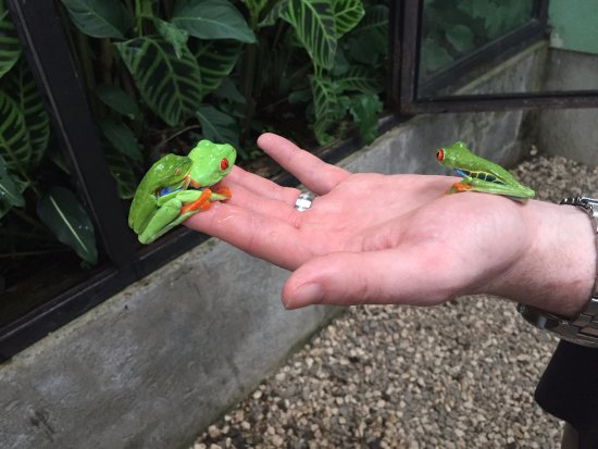 Monteverde Theme Park: Frogs, Frogs and more frogs