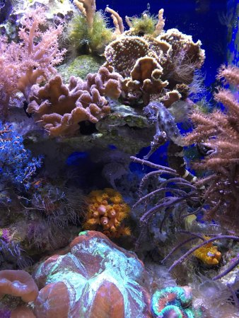Shedd Aquarium: photo4.jpg