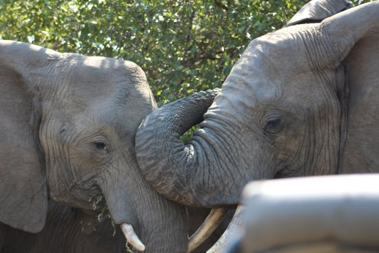 Waterbuck Game Lodge: elephant greeting
