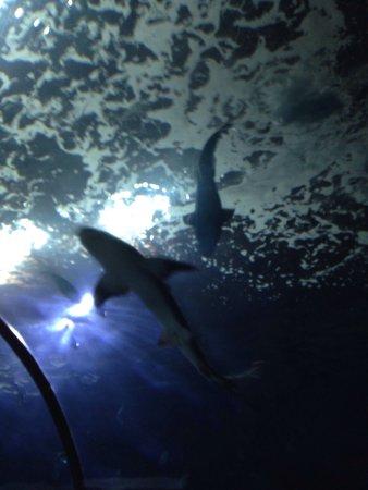 Oregon Coast Aquarium: photo5.jpg