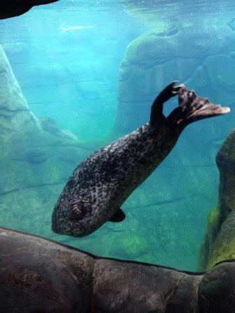 Oregon Coast Aquarium: photo6.jpg