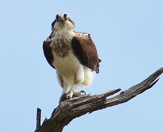 Naval Live Oaks Reservation: more birds