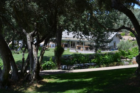 Still Waters Vineyards: Tasting room from the olive grove