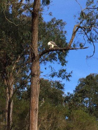 Gipsy Point, Austrália: photo2.jpg