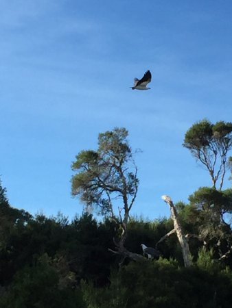 Gipsy Point, Αυστραλία: photo3.jpg