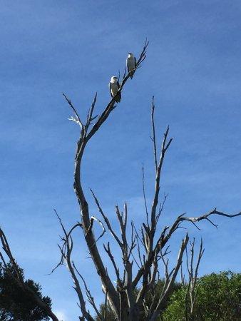 Gipsy Point, Austrália: photo5.jpg