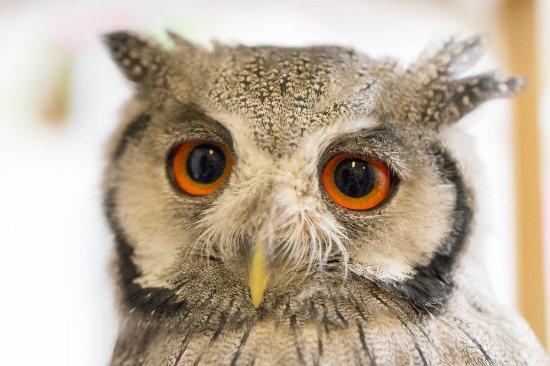 Owl Cafe Mohumohu Ginza