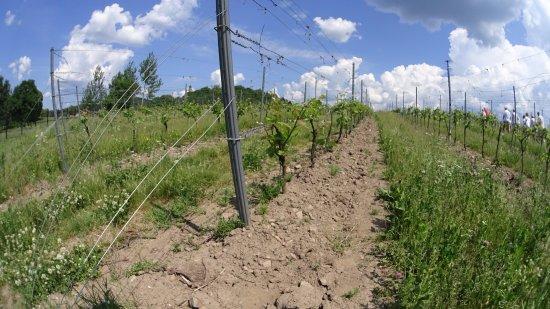 tillverkning av vin