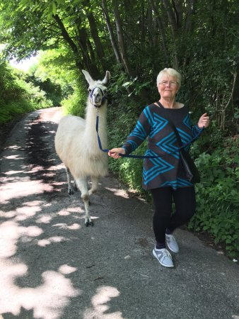 Wadhurst, UK: Lovely llama walk this weekend