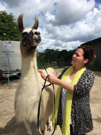 Wadhurst, UK: Lovely llama walk this weekend