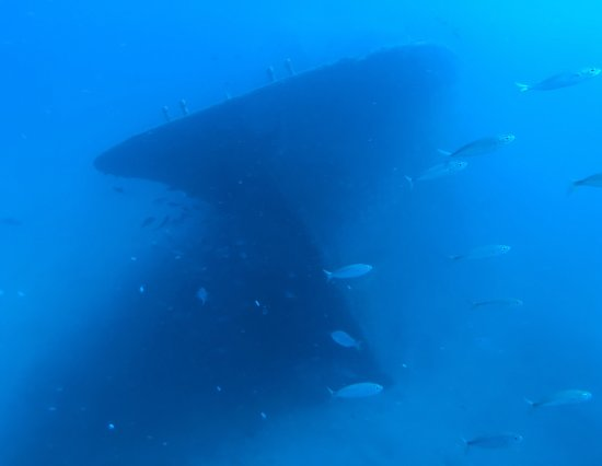 Submarine Safaris SL: photo2.jpg