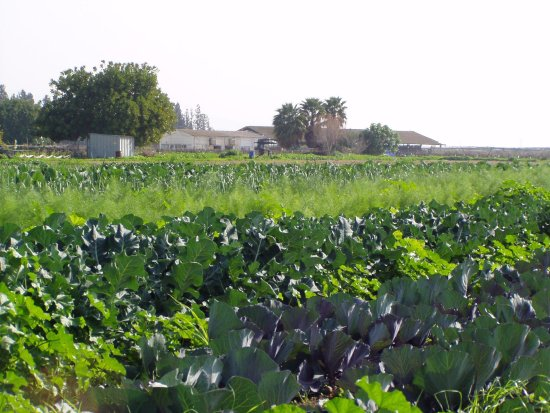 Beit She'an, Israel: Our organic vegetable garden