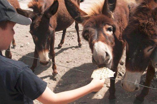feeding the donkeys on our tour
