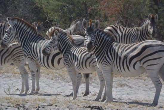 Leroo La Tau: Zebra at Laroo La Tau