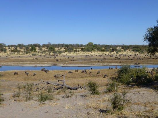 Leroo La Tau: The Boteti River channel at Laroo La Tau