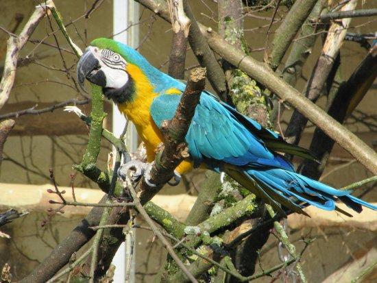 Ohne Zaun Einfach Im Freien Bild Von Zoo Wuppertal Wuppertal