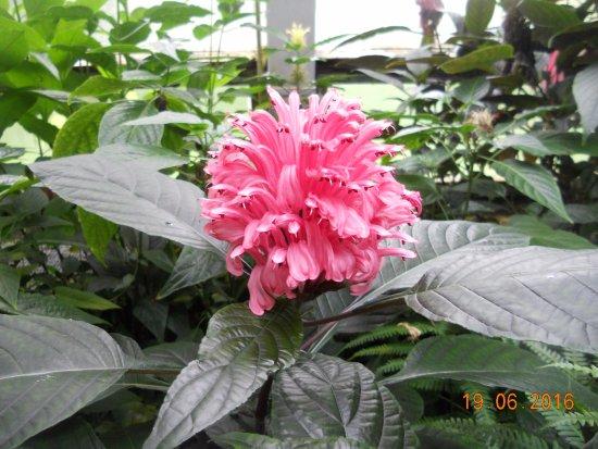 Botanischer Garten der Universität: Flores