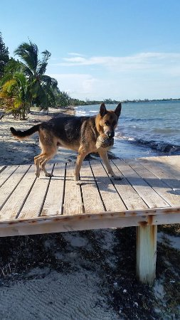 Seine Bight Village, Belize: Ms Rocky loves to play fetch the coconut off the pier