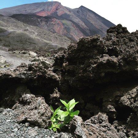 Pacaya Volcano: photo0.jpg