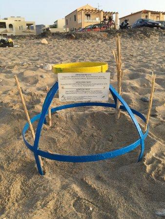 Caretta Beach Picture