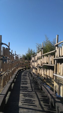 Bamboo Museum: 20160210_110051_large.jpg