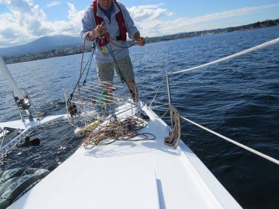 นาไนโม, แคนาดา: Crab trap experience!