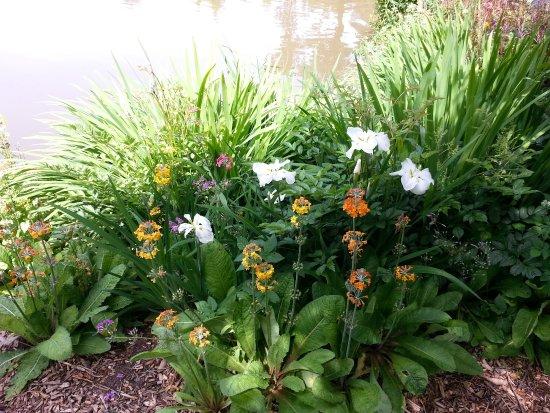 marwood hill gardens flowers in the bog garden - Bog Garden