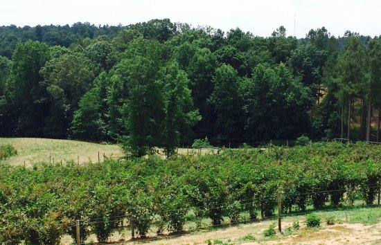 Sweet Acre Farms Winery