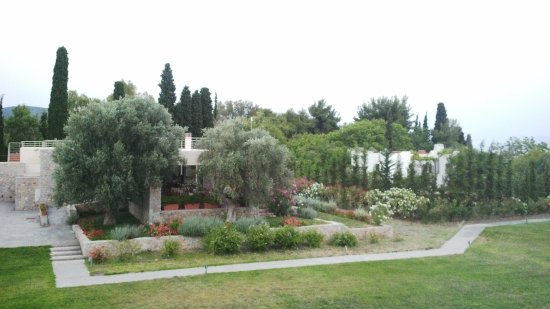Sipiada, Greece: The breakfast room is behind the olives, view from the room