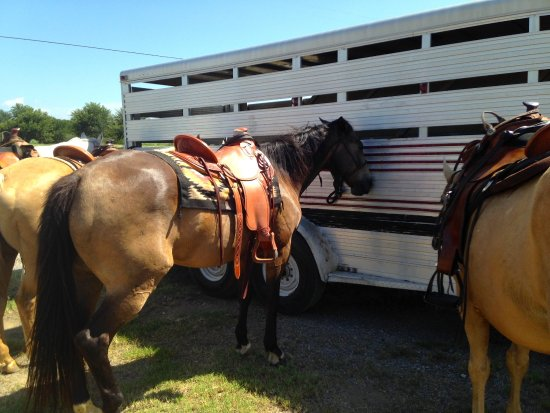 Widowmaker Trail Rides : Shiner is a beauty - LOVED this horse!! :)