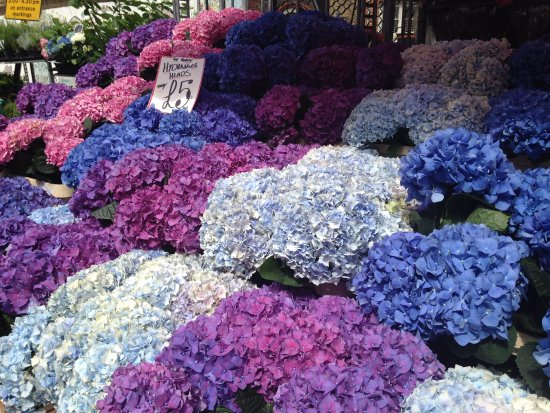 Columbia Road Flower Market: Stunning hydrangeas