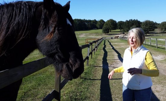 Alachua, Floride : Sir Lancelot