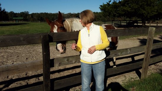"Alachua, FL: Horse - ""Got more carrots lady"", Lady - ""I'm sorry, I'm out of carrots"