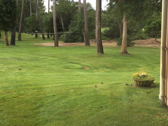 Madame Vacances Residence Du Golf & Les Appartements de Moliets: photo0.jpg