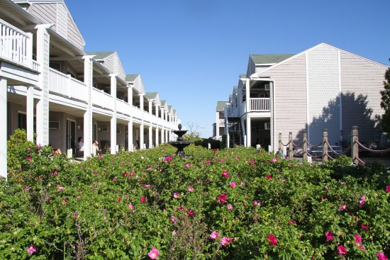 Ocean Walk Hotel: The Beach roses were beautiful and smelled divine.