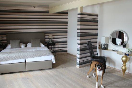 Clarens, İsviçre: Modern room interior; Boxer not included!