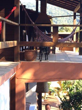 Pousada Tagomago Beach Lodge: Jimmy Carter the dog