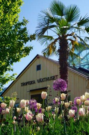 Uppsala, Sverige: Tropisches Gewächshaus