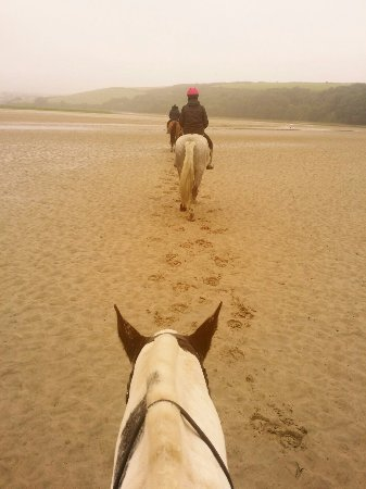 Newquay Riding Stables: Newquay horses_large.jpg