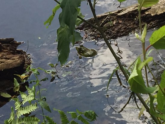 Oneonta, NY: Frog at Emmons Pond Bog