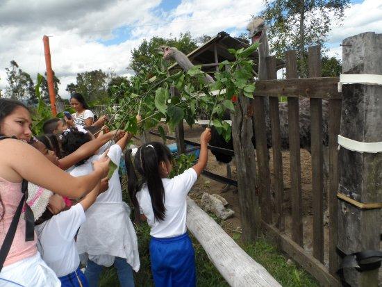 Popayan, Colômbia: interactuan con los animales, le dan alimento