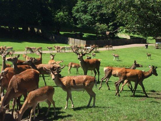 Naturwildpark Freisen