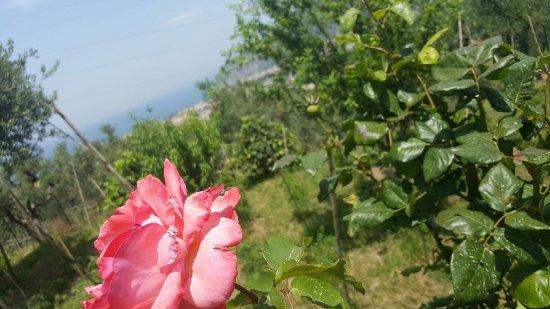 لوليفارا: Agriturismo L'Olivara